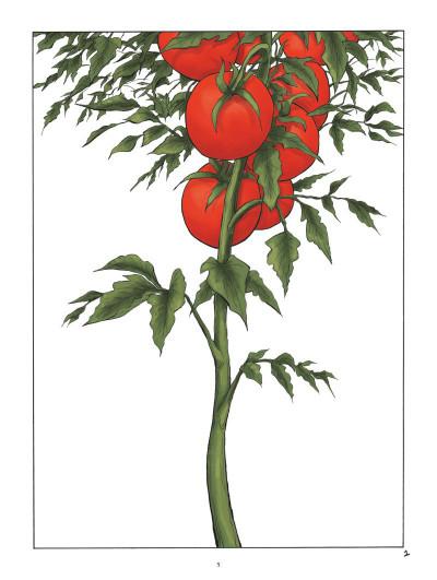 Page 1 La tomate
