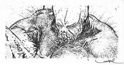 Page 1 Signet Bulrog - signé par Loisel - 12x22